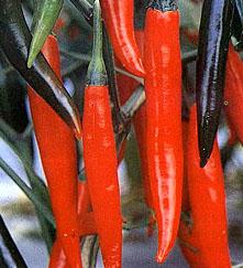 Cukrzyca i papryczki chili